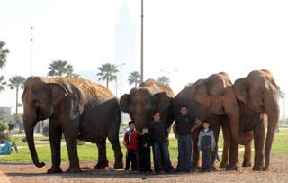 Maroc: éléphants bloqués: l'UE fixe les conditions du retour